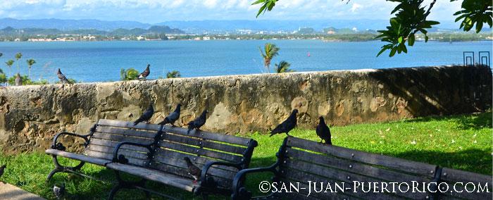 parque-de-las-palomas-san-juan-puerto-rico-attraction