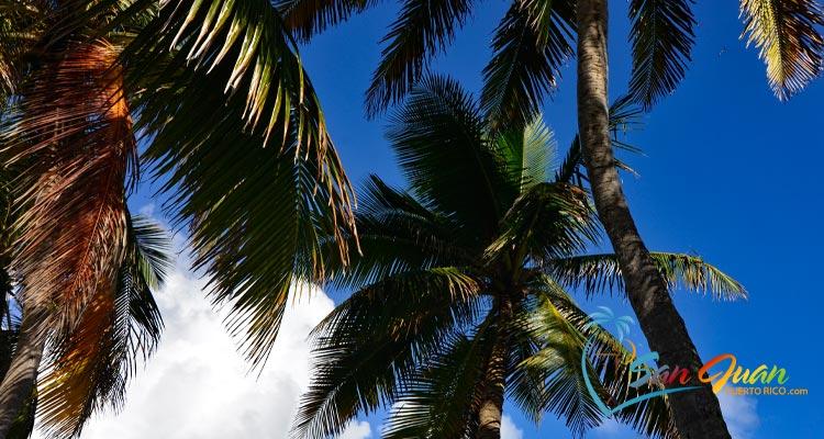 Weather in San Juan, Puerto Rico