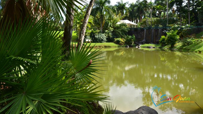 Jardin Botanico de la Universidad de Puerto Rico / San Juan Botanical Garden - San Juan, Puerto Rico