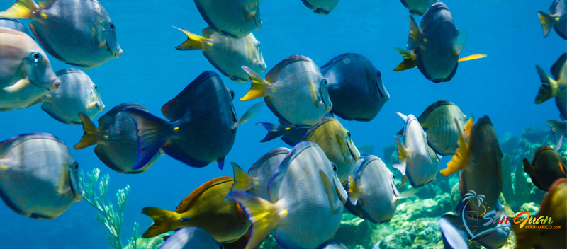 Snorkeling Tours - Things to do in San Juan, Puerto Rico