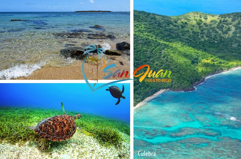 Best San Juan Puerto Rico Snorkeling Excursions